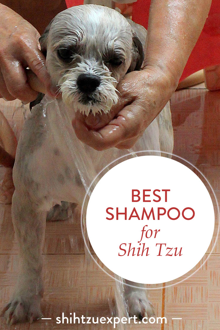 Best shampoo for Shih Tzu – Buyer's Guide