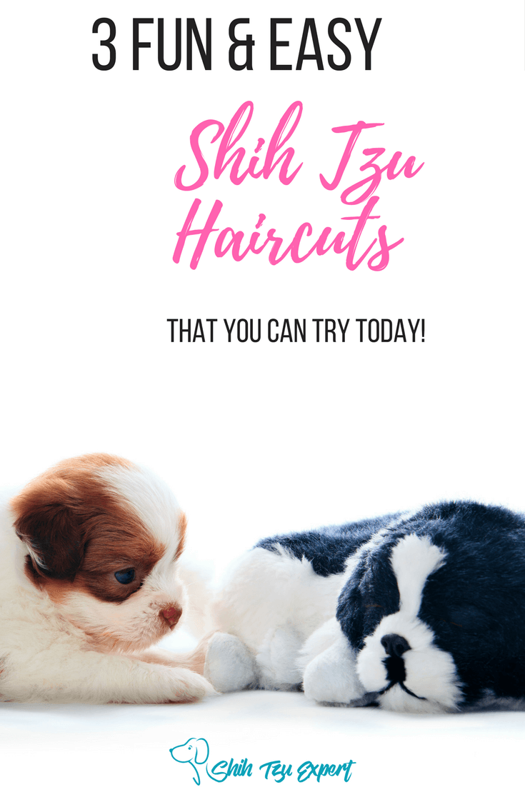 3 Most Stunning Shih Tzu Haircuts 1puppy Cut 2teddy Bear 3on