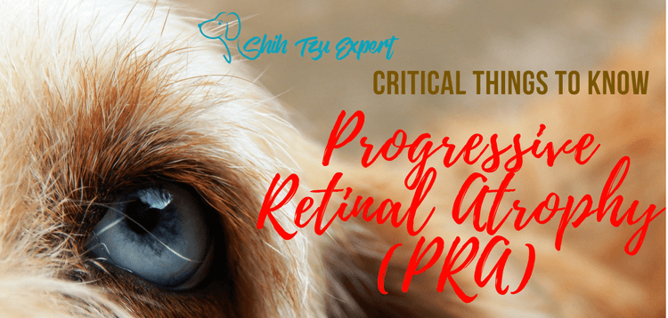 Progressive Retinal Atrophy (PRA) in dogs (Degeneration of the Retina)
