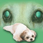 Progressive Retinal Atrophy (PRA) in dogs (Degeneration of the Retina)