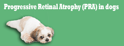 Progressive Retinal Atrophy (PRA) in dogs