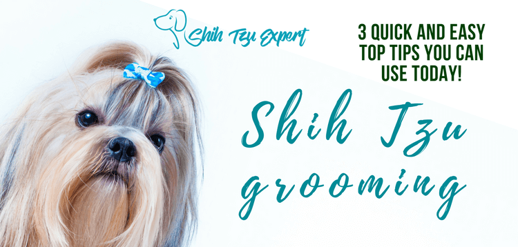 Shih Tzu grooming – Quick and Easy Top tips you can use Today!