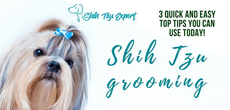 Best Dog Brush For Shih Tzu