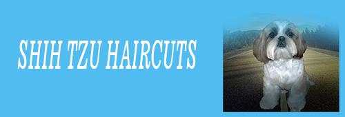 Shih Tzu haircuts. An image of a Shih Tzu with a Puppy cut
