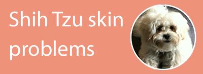 Shih Tzu skin problems
