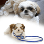Should I neuter my Shih Tzu? Dangers!, Risks, Advantages – Know these before Castrating your Dog!