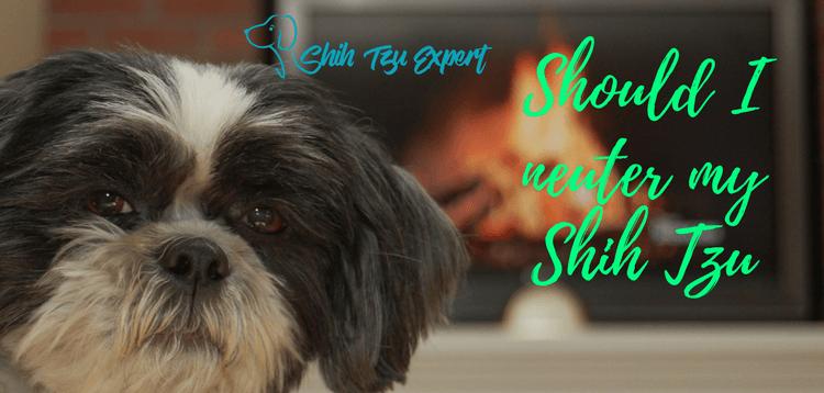 After Your Dog Gets Neutered