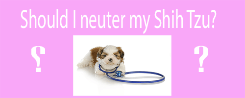 Does neutering a dog change his personality?