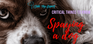 Spaying a dog – The MOST Critical things you MUST know Before!