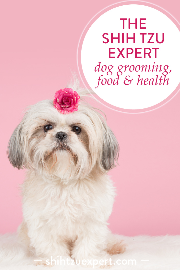 The Shih Tzu Expert • Dog Grooming, Food & Health