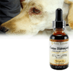 Canine Distemper-The Dog Killer! [Please Read THIS before putting your Dog to sleep!!!]