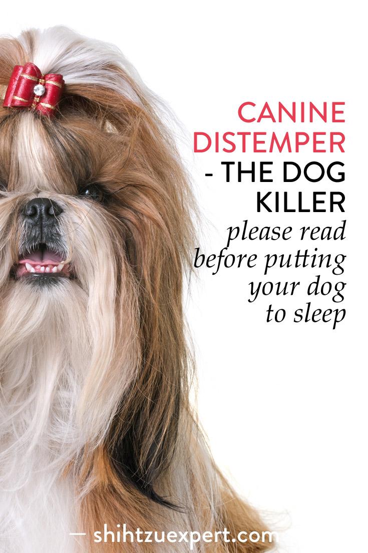 Canine Distemper-The Dog Killer