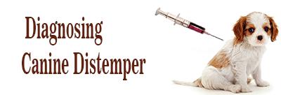 Diagnosing Canine Distemper