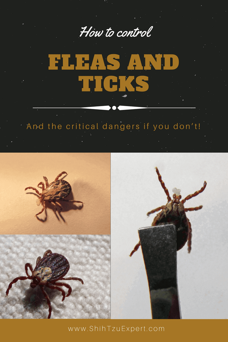 How to control fleas and ticks on dogs