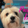 Parvo In Dogs – The definitive Guide