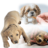 Parvo Symptoms In Dogs And Puppies