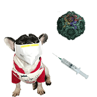 Prevention Of Parvo In Dogs