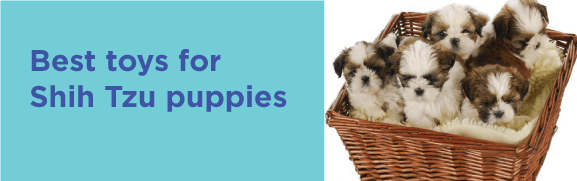 Best toys for Shih Tzu puppies