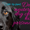 Does neutering a dog change his personality