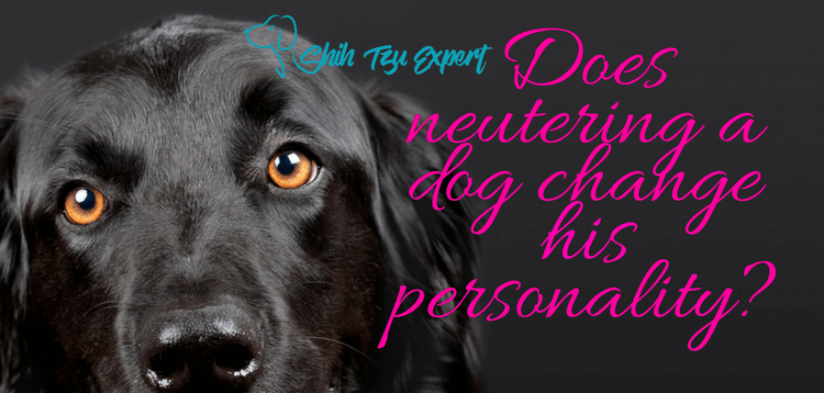 Does neutering a dog change his personality? Is it really necessary?
