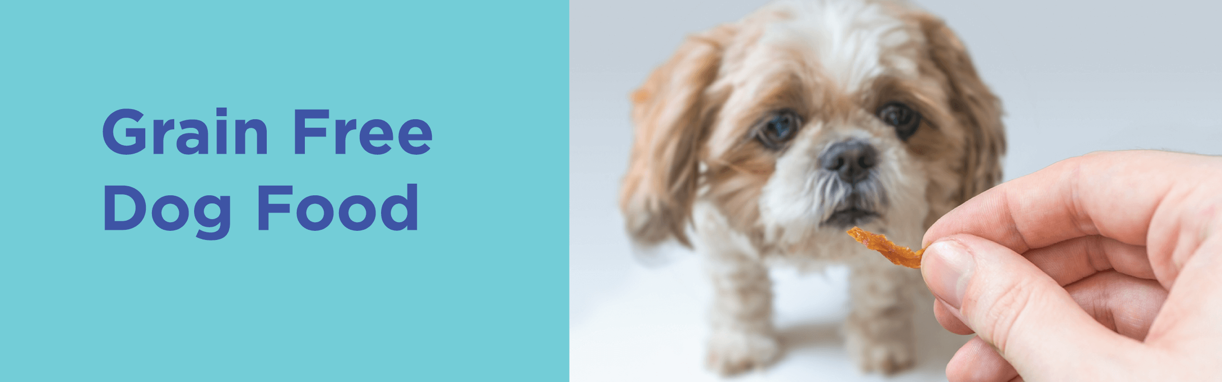 Grain Free Dog Food Better For Dogs