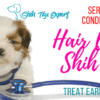 Hair loss in Shih Tzu – Serious condition that needs to be treated early