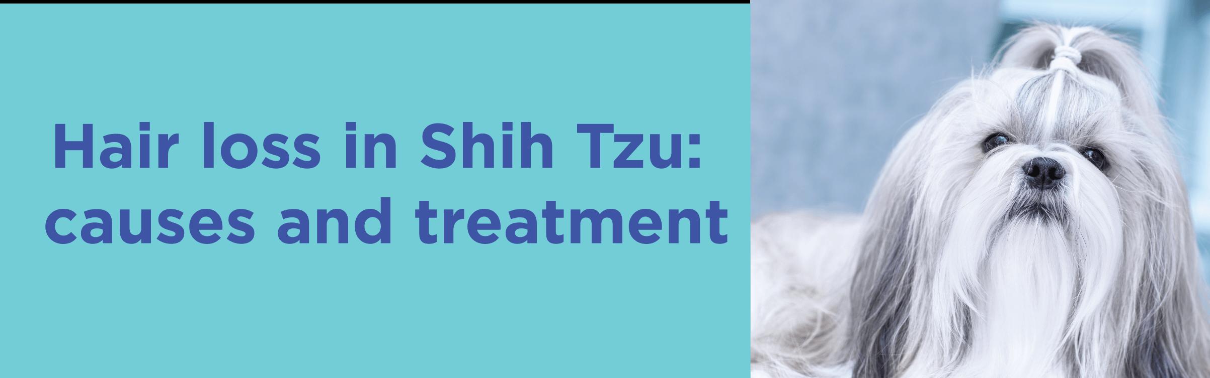 Hair loss in Shih Tzu causes