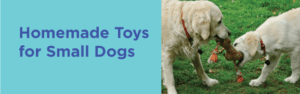 Homemade Toys for small dogs