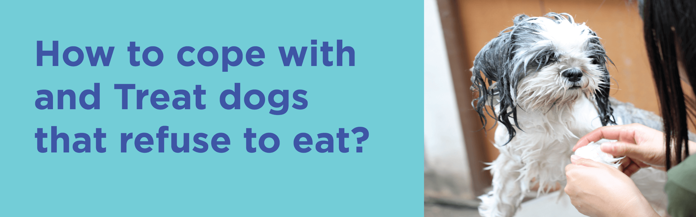 How to cope with and Treat dogs that refuse to eat?