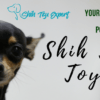 Shih Tzu Toys – Your pet has ONLY a very few possessions