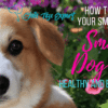 Small Dog Toy – keep your small dog healthy and entertained
