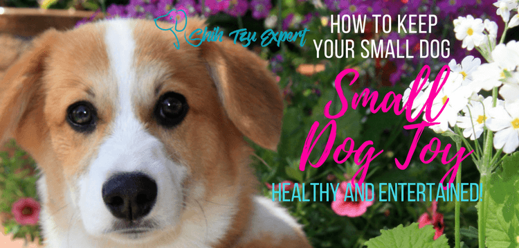 Small Dog Toy – keep your small dog healthy and entertained!