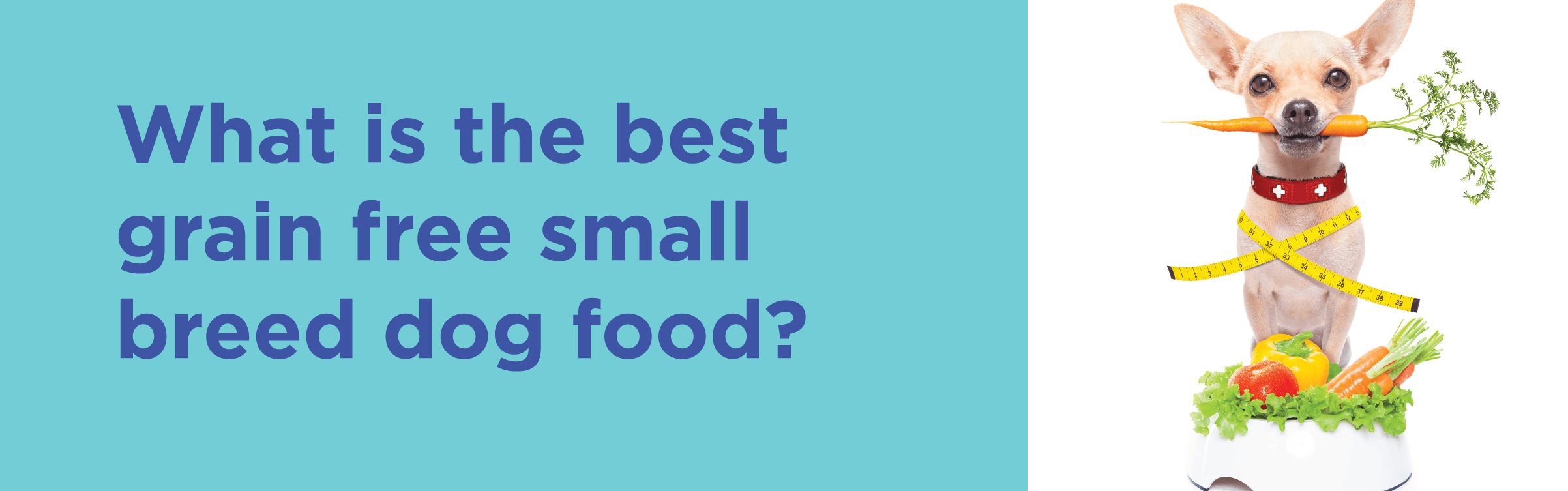 What is the best grain free small breed dog food?