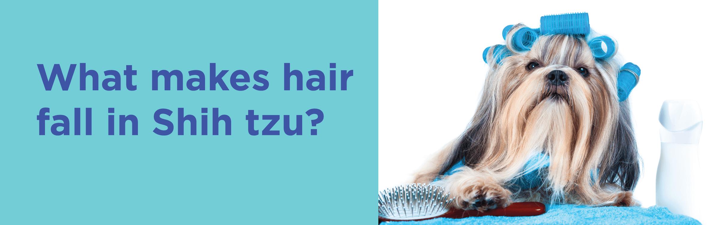 What makes hair fall in shih tzu