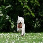 Small Dog Toy – keep your small dog healthy and entertained!!!