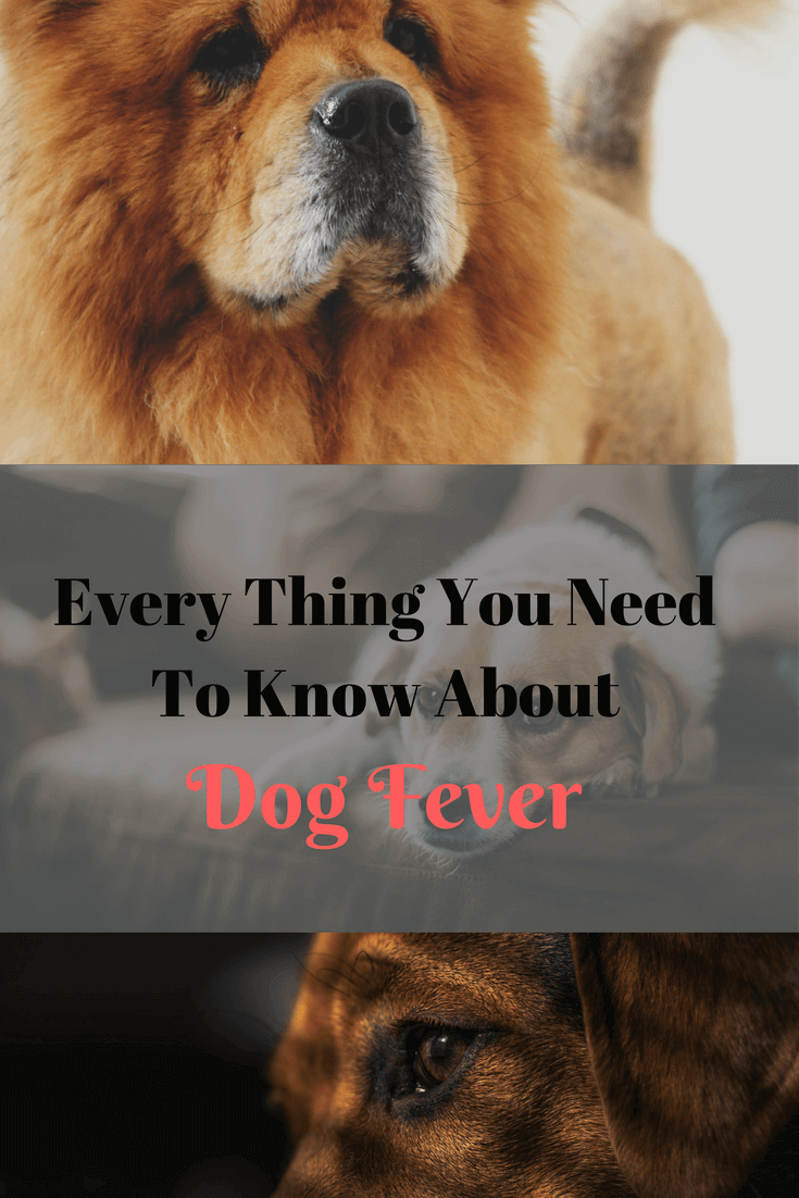 Dog fever critical facts