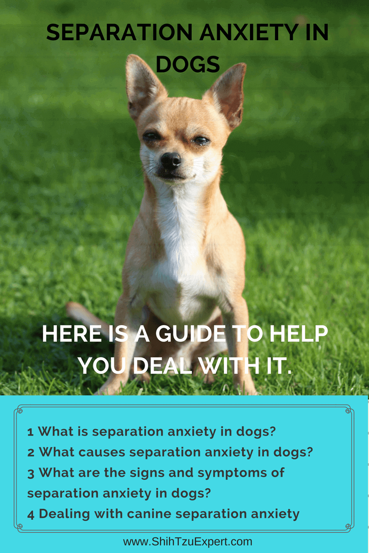 Separation Anxiety in Dogs Here is a guide to help
