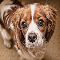 Separation Anxiety in Dogs : Here is a guide to help you deal with it.