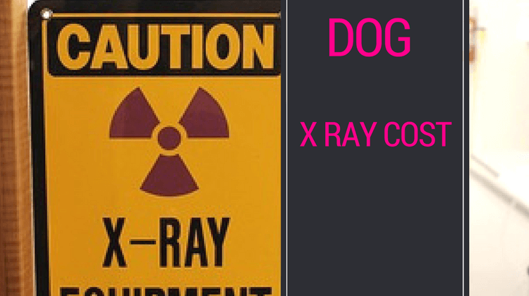 Dog X Ray Cost : Expensive but your dog deserves the best care!!!