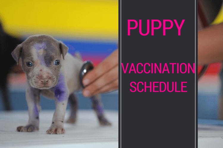 Puppy Vaccination Schedule Health And Safety For Our Fur Babies