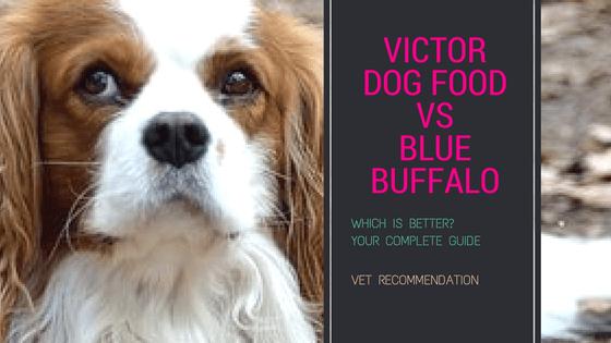 Victor Dog Food vs Blue Buffalo Your Complete Guide in 2018 [VICTOR'S  PROFESSIONAL FORMULA Vs BLUE BUFFALO BASICS]