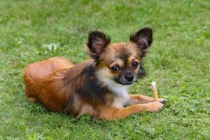 Can Switching Dog Food Cause Diarrhea