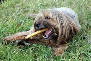 Puppy Teething Toys: Best Chew Toys for your Teething Puppies