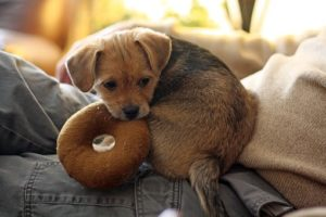 The Best Tough Dog Toys