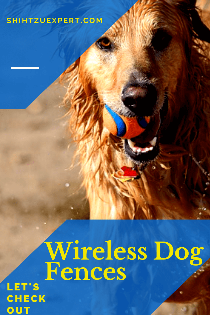 Wireless Dog Fence Best Solution 2018 For Your Dog S