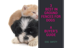 3 Best in ground fences for dogs : [Your Ultimate Guide to underground dog fences]