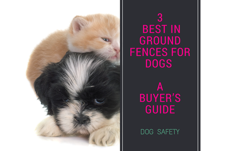 3 Best In Ground Fences For Dogs Ultimate Guide To