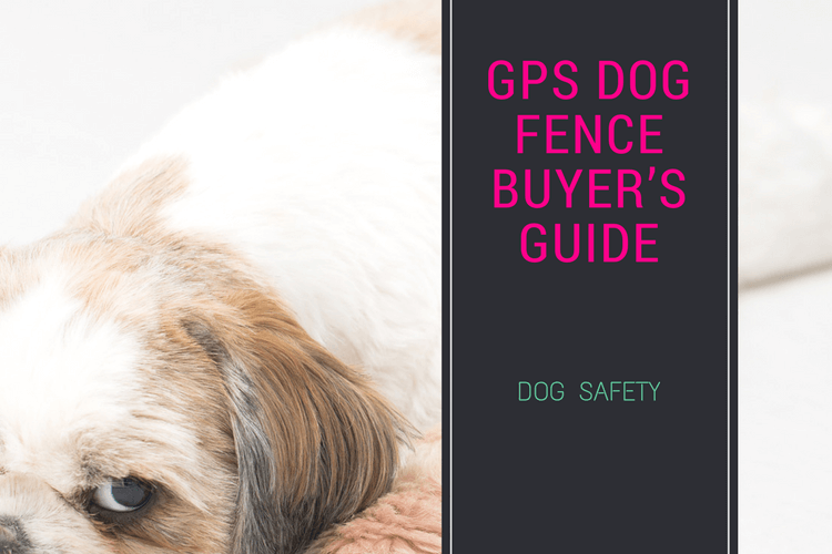 Gps Dog Fence Buyer S Guide 2 Main Products But Which Is