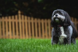 Best in ground fence for dogs