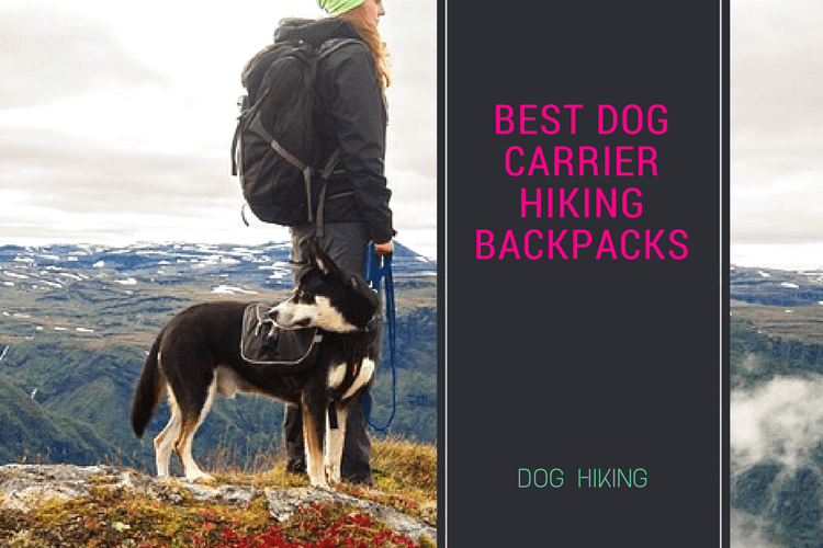 Best Dog Carrier Hiking Backpacks : Review of Top Carrier